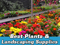 Best plants & landscaping